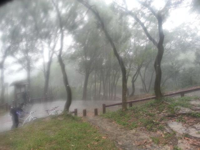 大欖自然教育徑附近避雨中