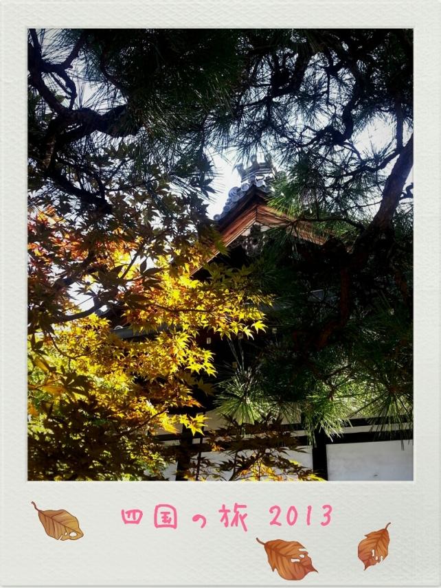 踏入初秋的四國,已開始有少許黃葉