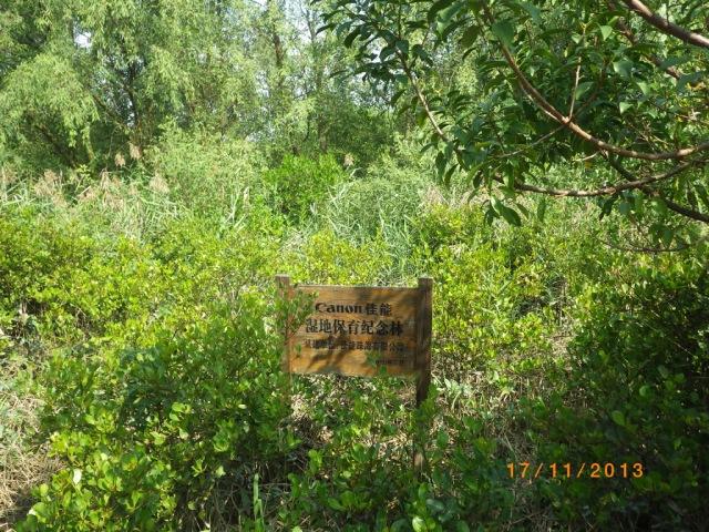紅樹林濕地生態公園內