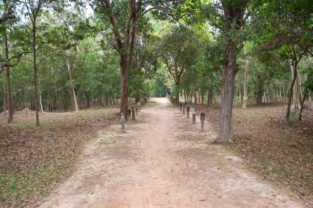 從塔瑪儂寺 (Thommanon)過對面 周薩神廟(Chau Say Tevoda)須經過一個小樹林