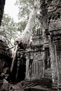 粗壯的大樹氣根,像蠎蛇一樣盤繞屋簷