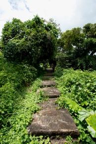 綠悠悠的樹徑