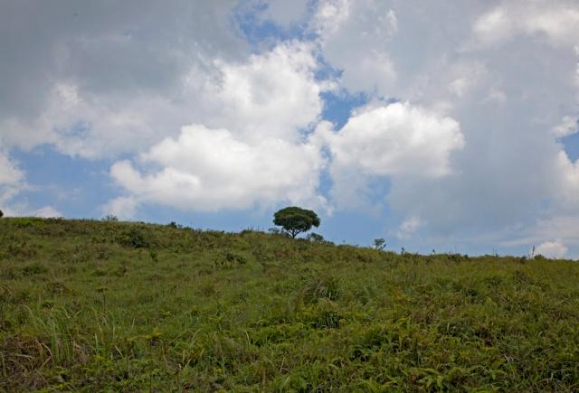 在平原上的一棵獨樹