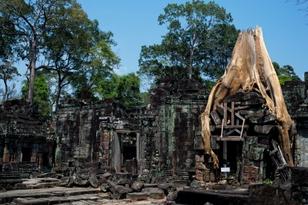 大樹窂窂地抓住石牆而生,為了保護古蹟,只好把古樹砍掉