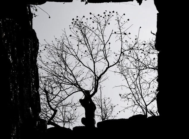 帶點滄桑的枯樹