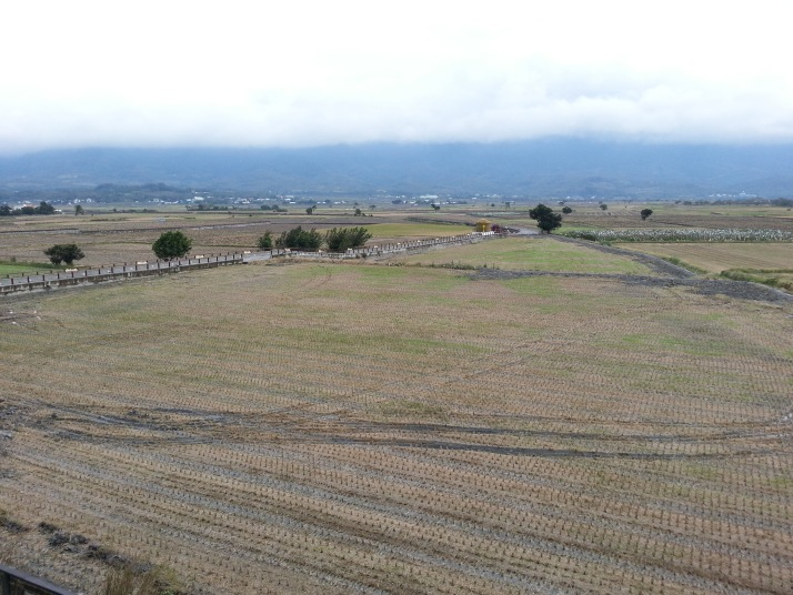 往池上途中經過很多稻田