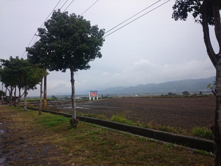 關山車站附近的新稻田