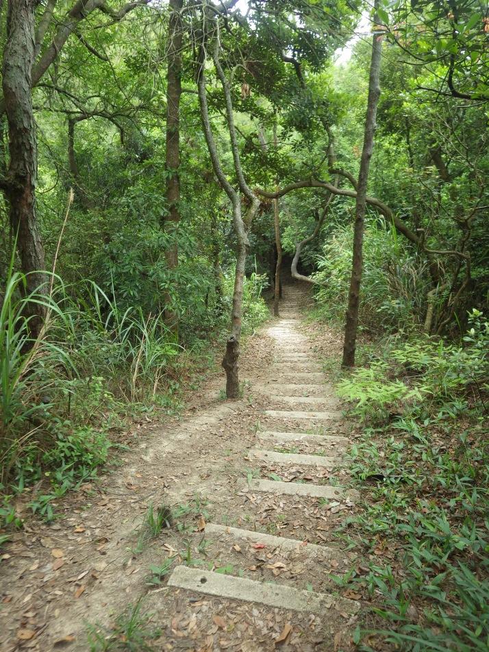 上老人山的林道
