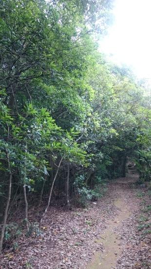 大部分走的是林道,兩旁有樹木,不會太熱