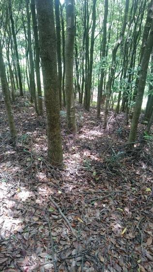 途中經過樹林