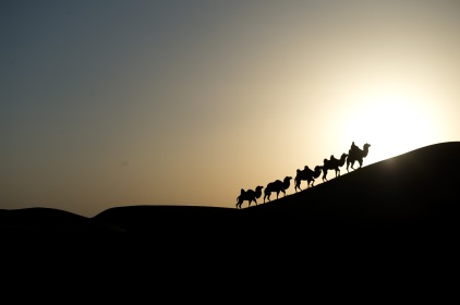 日落下的駝隊